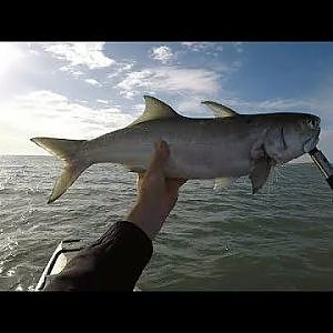 Blue Salmon Off The Flats